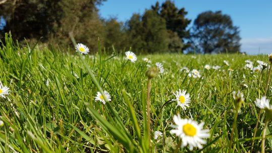 TDHS Grass Pollen Season